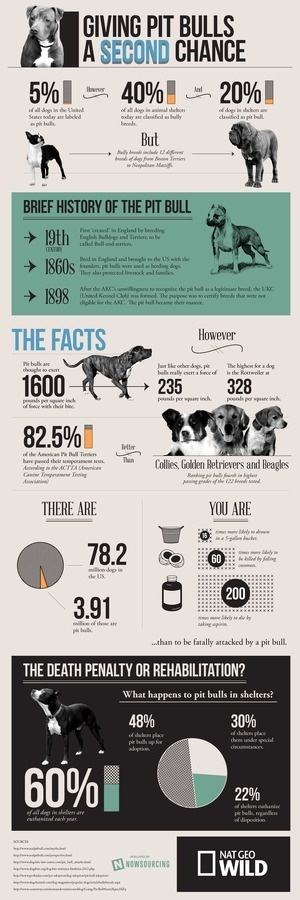 The Truth About Pit Bulls #graphic design #infographic