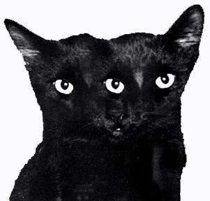 ghostcat3.jpg (301×288) #ghostcapital #cat #black