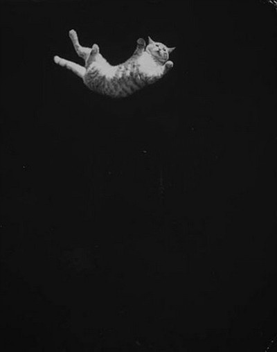 another #falling #cat #black