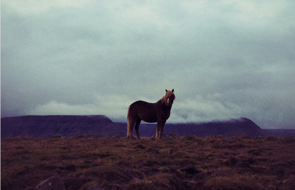 mac spoilers iphone 5 iceland photo 03 #horse #iphone #iceland #5 #technology