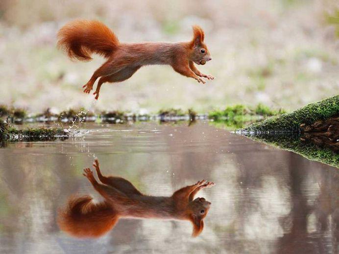 Julian Rad Captures Fabulous Photos of the European Red Squirrel