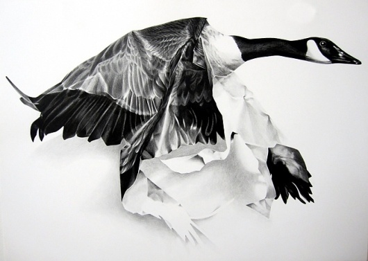 David B. Smith Gallery | Christina Empedocles, One Canadian #on #illustration #art #pencil #paper