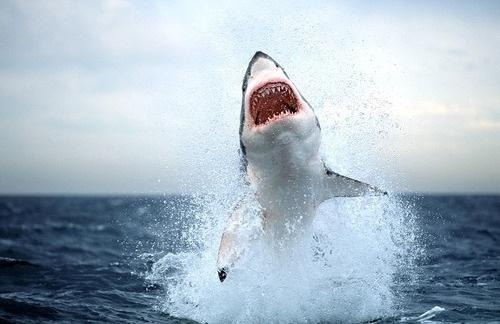 DeadFix » SOUTH AFRICA SHARK ATTACK #photography #ocean #sea #shark