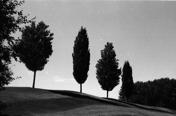 _. | Triangular Love. #rollei #white #golf #black #trees #photography #and #100 #iso #love