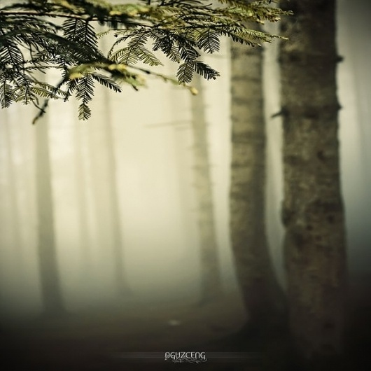 Jaw-dropping landscape photography by Oguz Cengizhanoglu | The D-Photo #trees