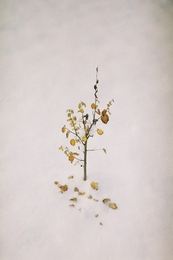 All sizes | Untitled | Flickr - Photo Sharing! #tree #snow #minimalism #photography #film