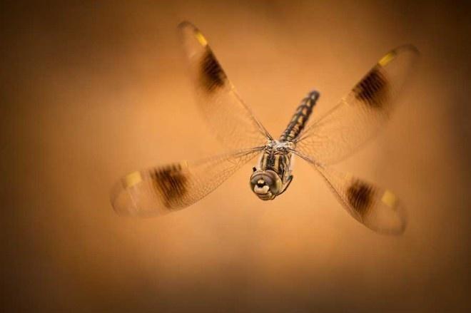 Macro Photography by Erez Marom #inspiration #photography #macro