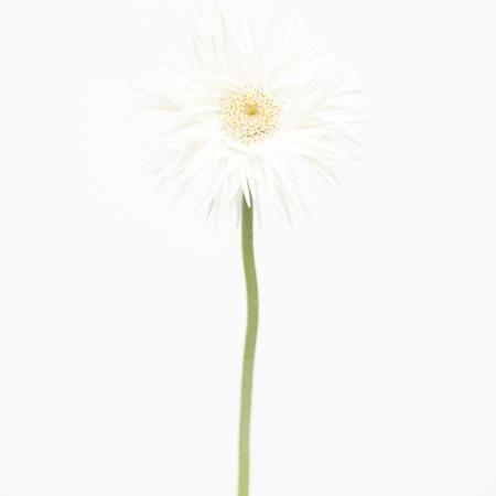 MA29 #flower #photography