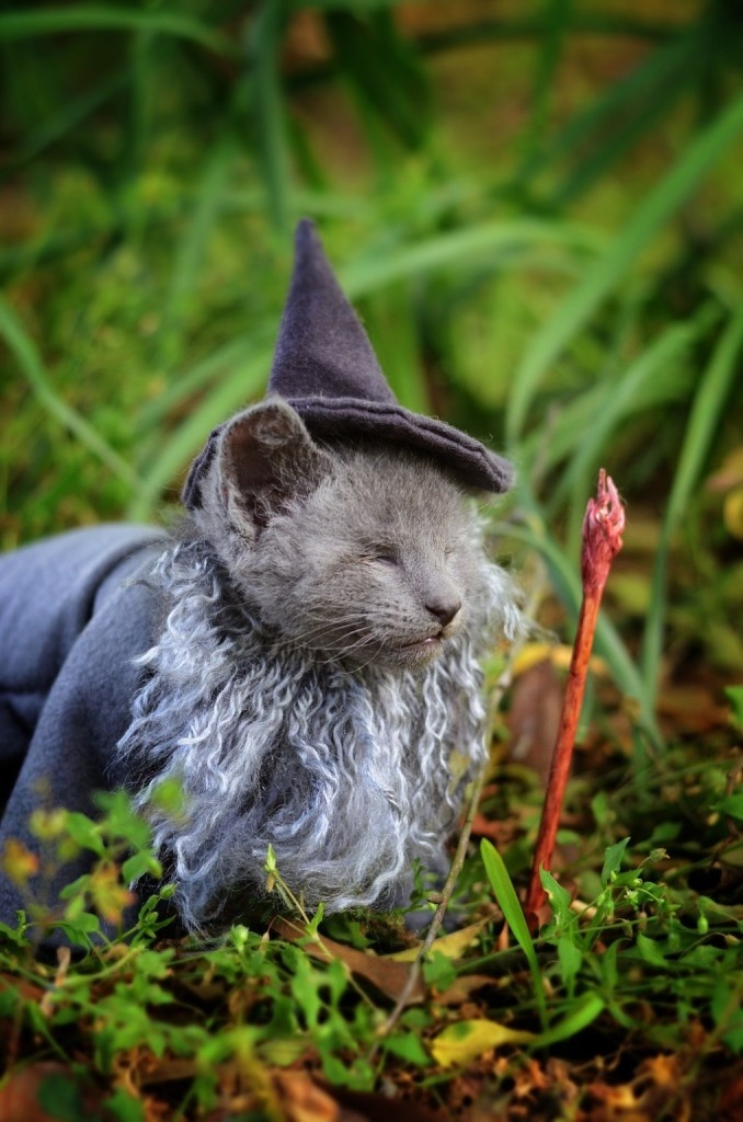 Creative Ideas: Combines Adorable Cats And Pop Culture For Awesome Photos #cats #cosplay #photography #animals