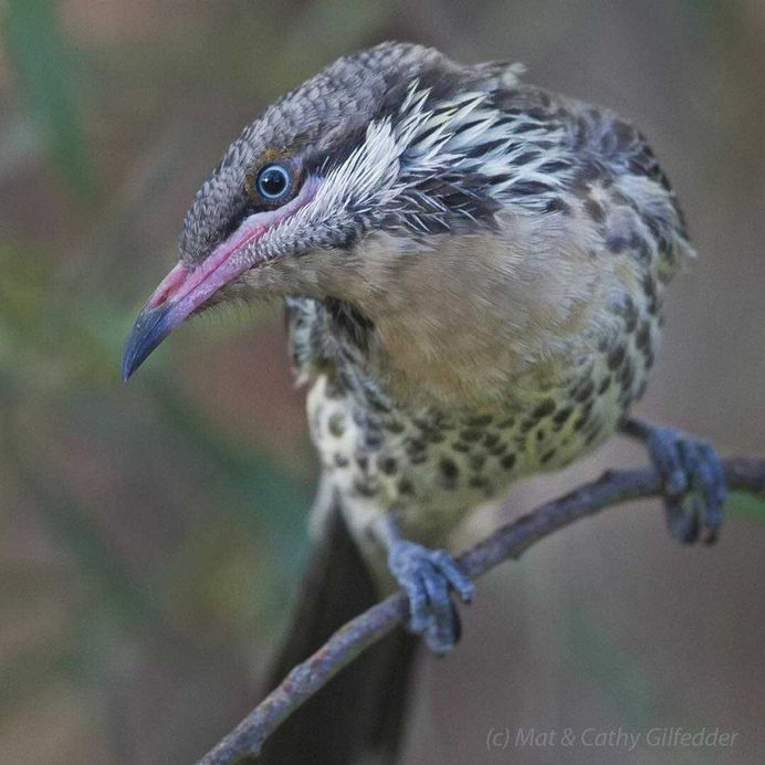 #birdsofinstagram: Spectacular Bird Photography by Mat & Cathy Gilfedder