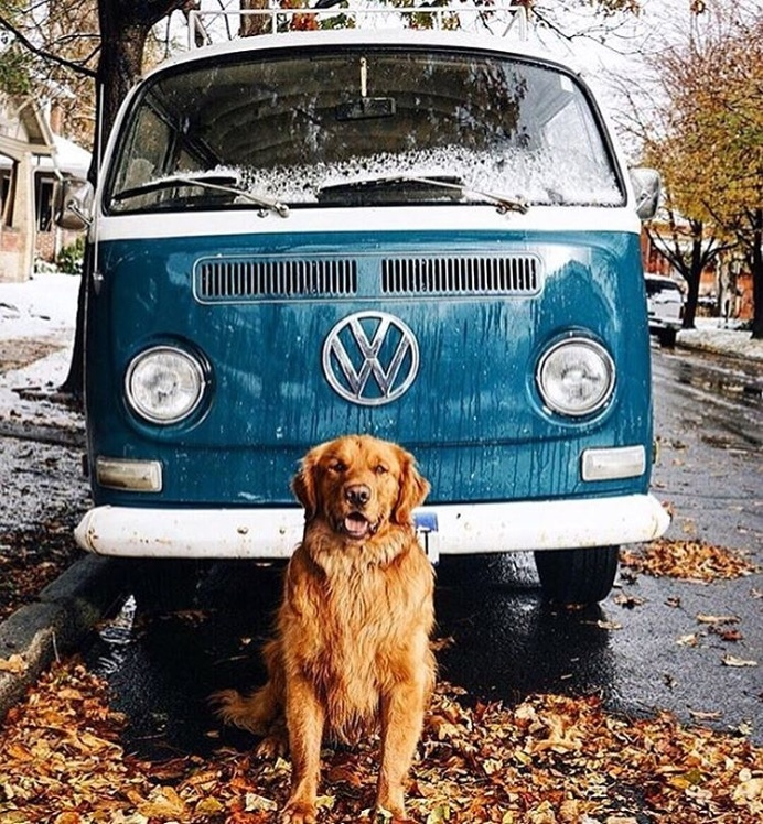 via @roadcrewcrunch 🐶 Hands down the most #beautiful and #delicious page on Instagram! @roadcrewcrunch 🙌🏽