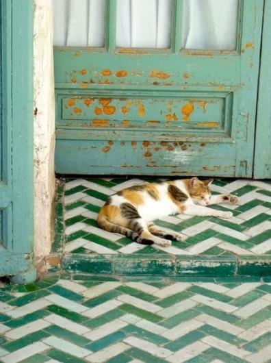 Vintage by Vero #interior #design #cat #floor #deco #decoration
