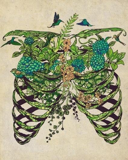 Daydreamer   Flickr - Photo Sharing! #bone #dream #bird #green