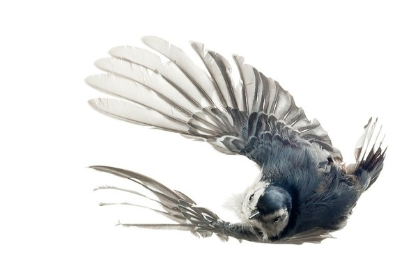 ☺ A blog for birds...