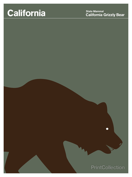 California #grizzly #bear #brown #grey