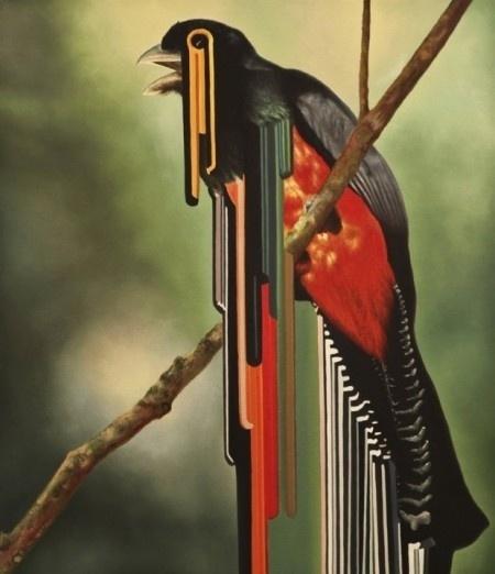 twitter - Maurizio Bongiovanni » ISO50 Blog – The Blog of Scott Hansen (Tycho / ISO50) #maurizo #bongiovanni #bird #painting #art