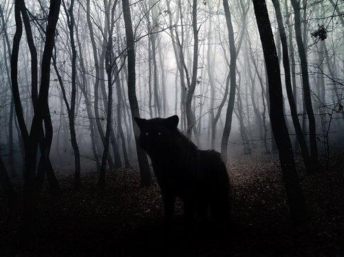 DETHJUNKIE* #forest #wolf