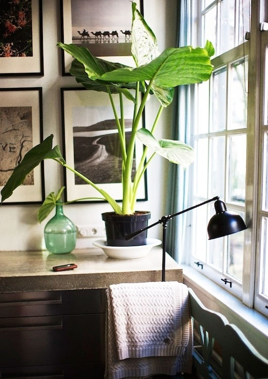 sfgirlbybay / bohemian modern style from a san francisco girl #interior #design
