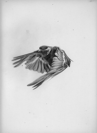 All sizes | Hellovon // #drawing #bird #flying #hello #von #pencil #grey
