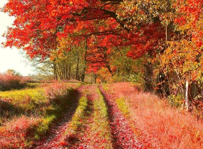 #colorful#red#orange#autumn#trees#