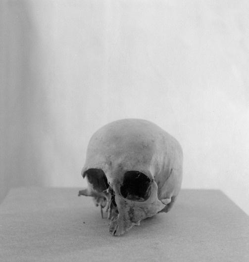 crane01.gif (Imagem GIF, 1020x1074 pixéis) #lauris #white #paulus #black #and #skull