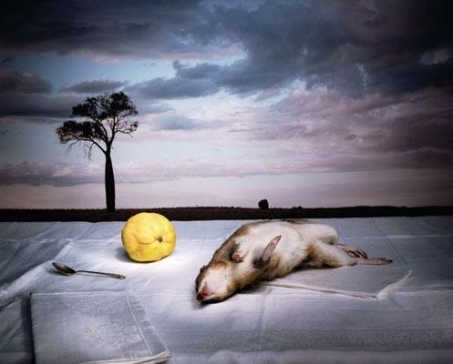 Google Image Result for http://www.qcp.org.au/uploads/images/artists/Marian%2520Drew/Bandicoot.jpg #dead #photography #landscape