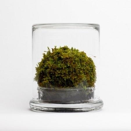 ISO50 Blog – The Blog of Scott Hansen (Tycho / ISO50) » The blog of Scott Hansen (aka ISO50 / Tycho) #terrarium #moss