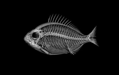 Baubauhaus. #esqueleton #fish #black #art #dead