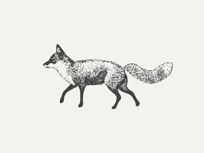 Fox #white #fox #color #black #illustration #one #animal