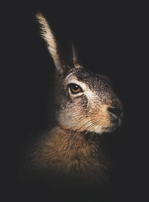 YIMMY'S YAYO™ #photo #rabbit #hare