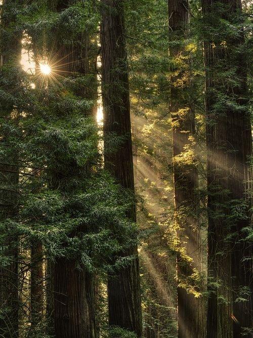 wooden dreams #dreams #wooden