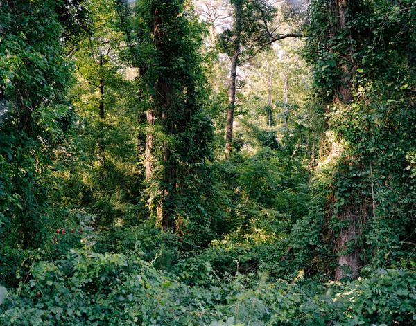 Justin James Reed, Land #photo #flak #landscape #photography #foliage