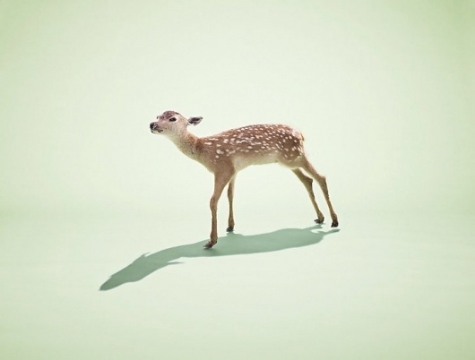 FormFiftyFive – Design inspiration from around the world » Blog Archive » Nick Meek #deer #photography #minimal