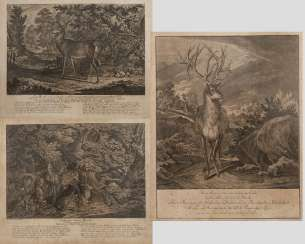 Johann Elias Ridinger, Convolute Wild Representations