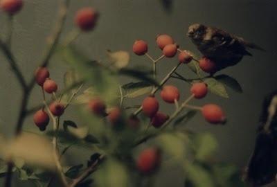 The Collective Loop: Debbie Carlos Human Nature Collection #berries #carlos #bird #photography #debbie