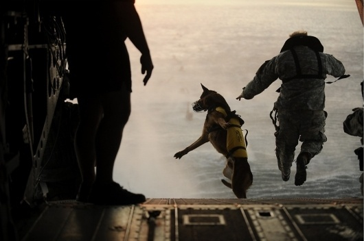 War Dog - An FP Photo Essay By Rebecca Frankel | Foreign Policy #war #dog