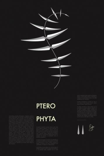 plants : aida novoa : Portfolios : Domestika #plants #patten #editorial #black