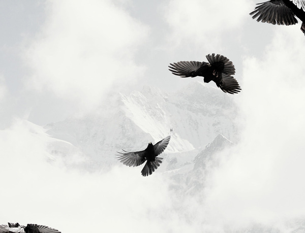 Nick Meek #snow #bird #photography #contrast #mountains