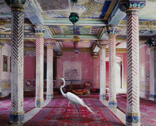 Karen Knorr #inspiration #photography #art