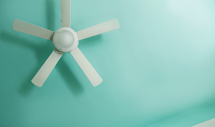 #fan #turquoise #aqua green #blue #tropical
