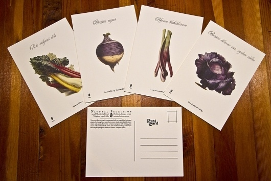 Natural Selection: Restaurant name, Branding and Identity design / The Official Manufacturing Company #post #card #design #graphic