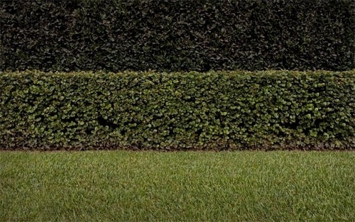 brad_moore_01.jpg (500×313) #lawn #photography #minimal #landscape
