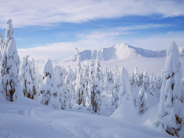 heaven. #canada #snow #landscape #nature #photography #mountains #winter