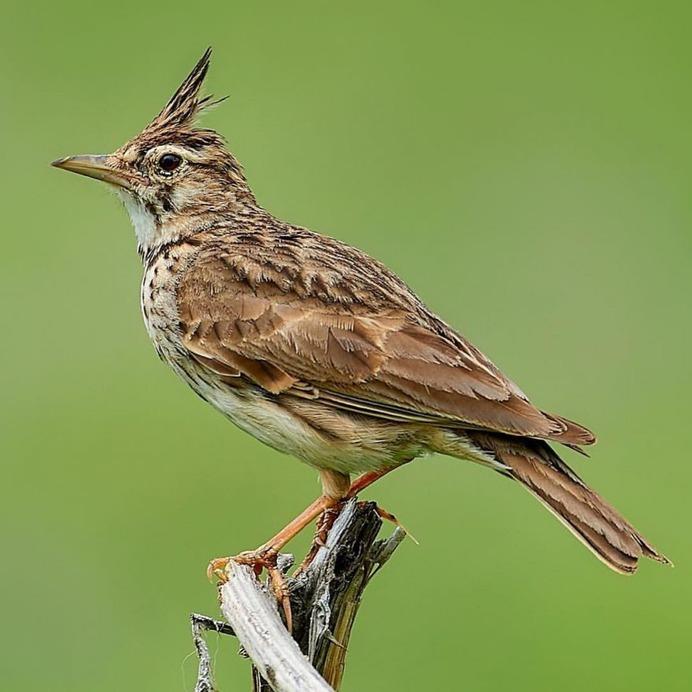 #birdstagram: Graceful Bird Photography by Peter Kühn