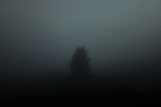 023 on the Behance Network #mist #photography #fog #tree