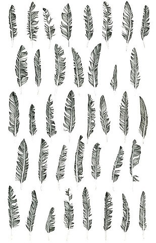 7e4e7a4bac7fa5c4dbc74b8842df2452e70bef29_m.jpg 309×480 pixels #illustration #drawing #feathers