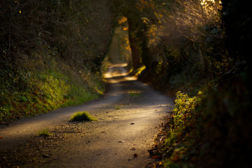 Wickham Hall Lane by Stuart Miller #driving #road #best