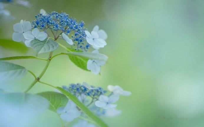 Candy Coloured Flowers Photography by Miyako Koumura