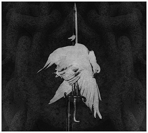 FFFFOUND! | THEM THANGS #sword #bird