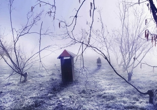 Andrew Pearce's Profile #fog #trees